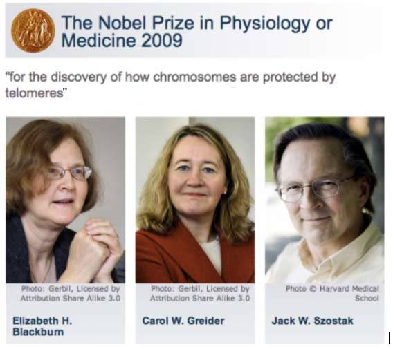 Telomeres and Telomerase Nobel Prize Winners